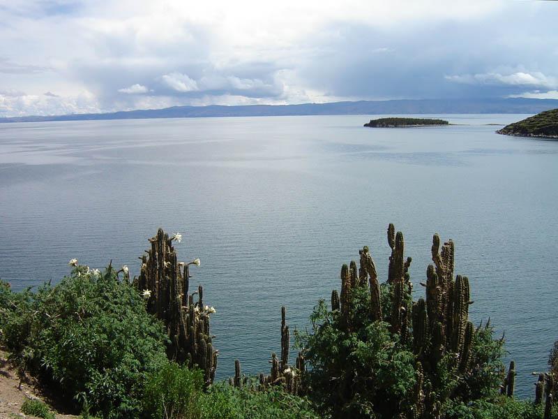 Bolivia, Cactus sul lago Titicaca.