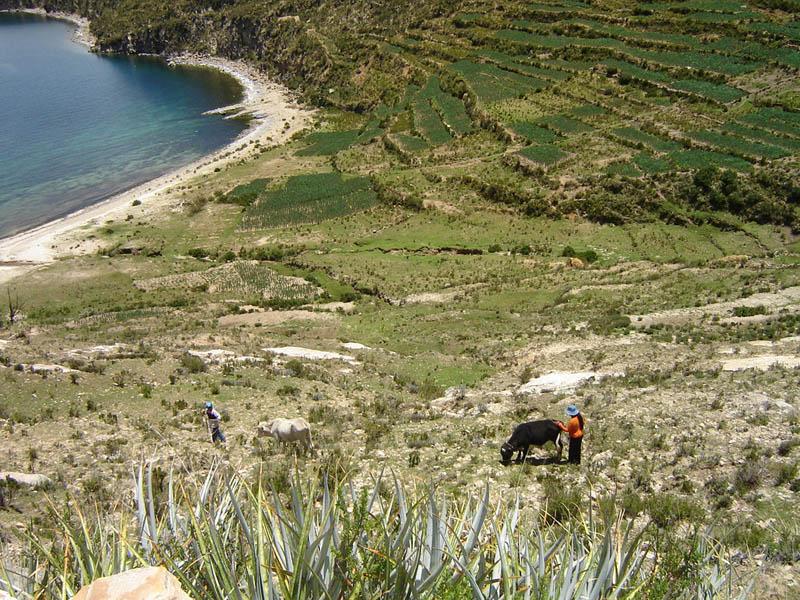Bolivia, terrazzamenti agricoli sulle rive dell'Isla del Sol.