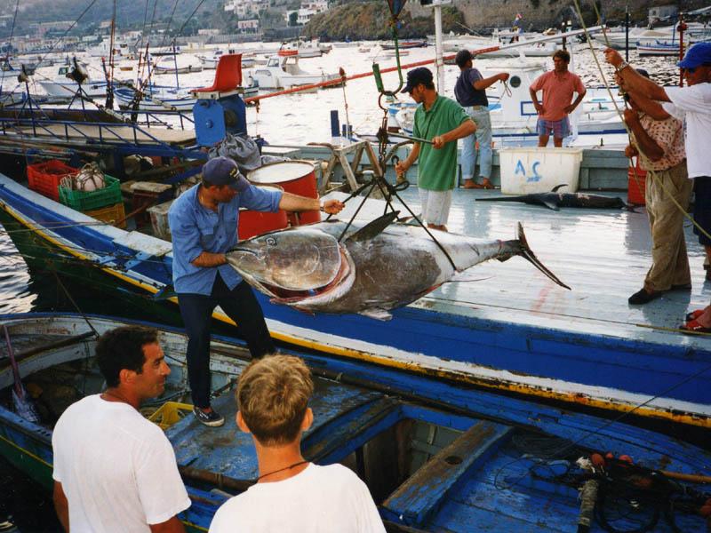 Lipari, Pesca grossa sulla Spadara