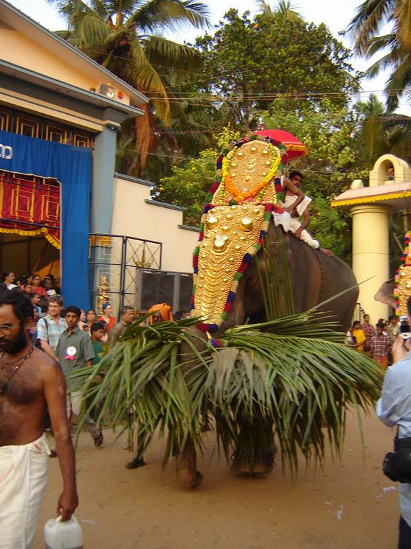 India, Elefanti alla Festa.