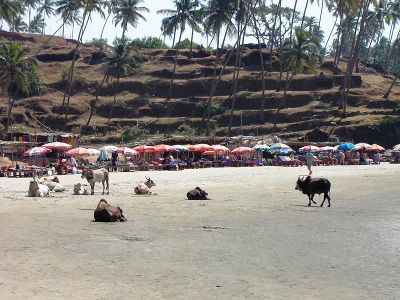India, Goa - Spiaggia di Vagator.