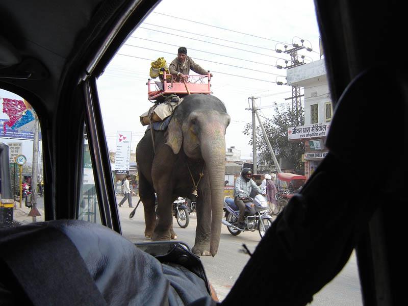 India, Jaipur - Traffico misto.