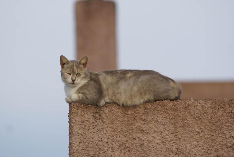 La Gatta sul tetto