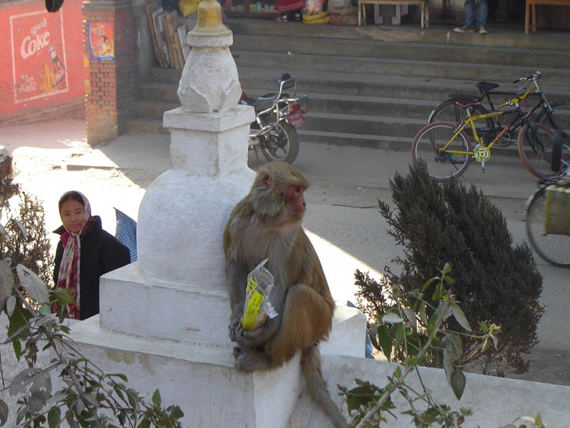 Nepal, Kathmandu, colazione....