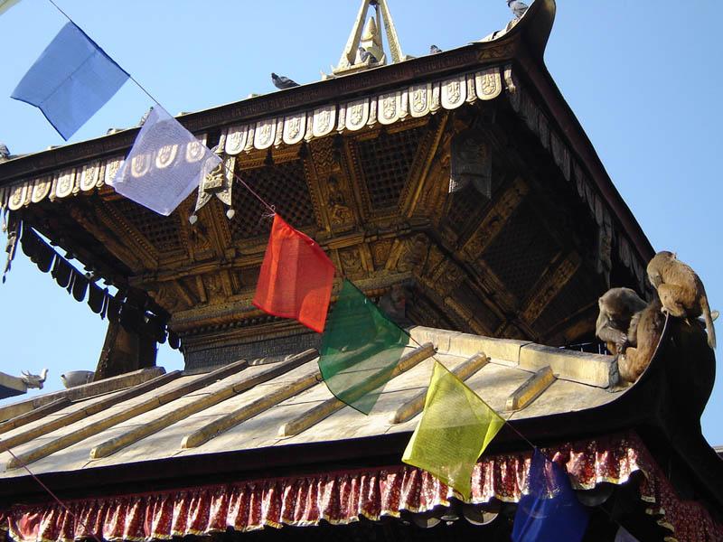 Nepal, Katmandu, scimmie sul tempio.