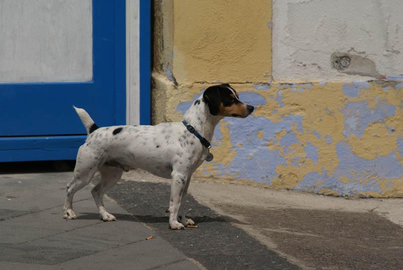 Salina, cane