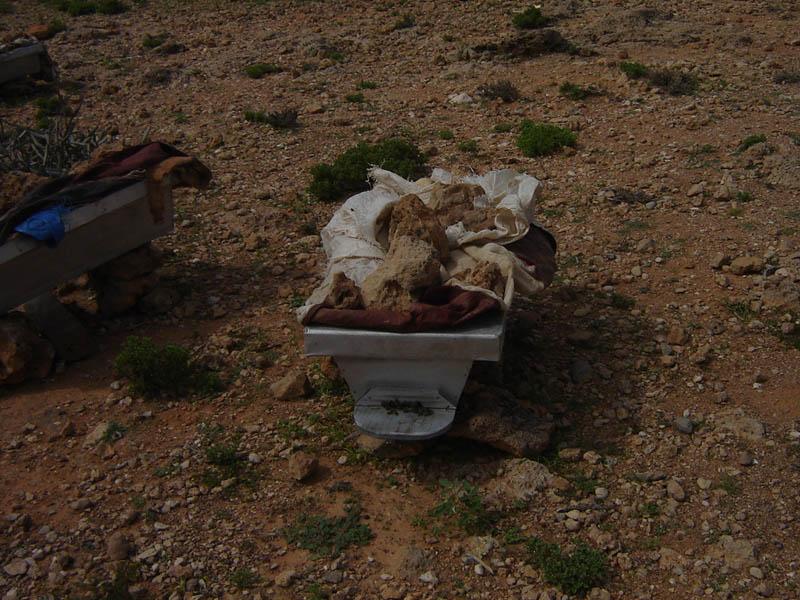Socotra, arnie