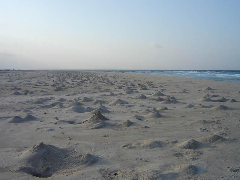 Socotra, le tane dei granchi sulla spiaggia