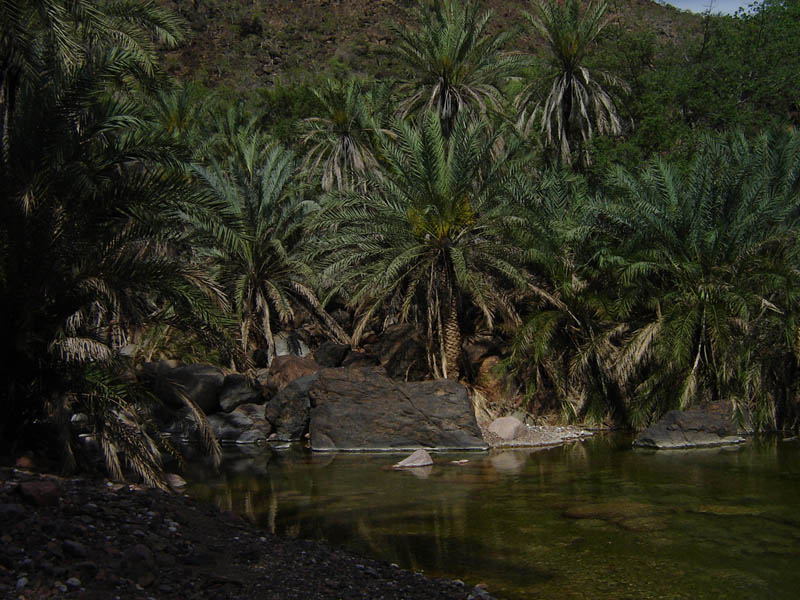 Socotra, il Wadi Dirhur
