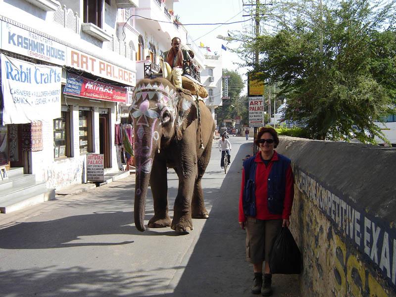 Arriva l'Elefante.