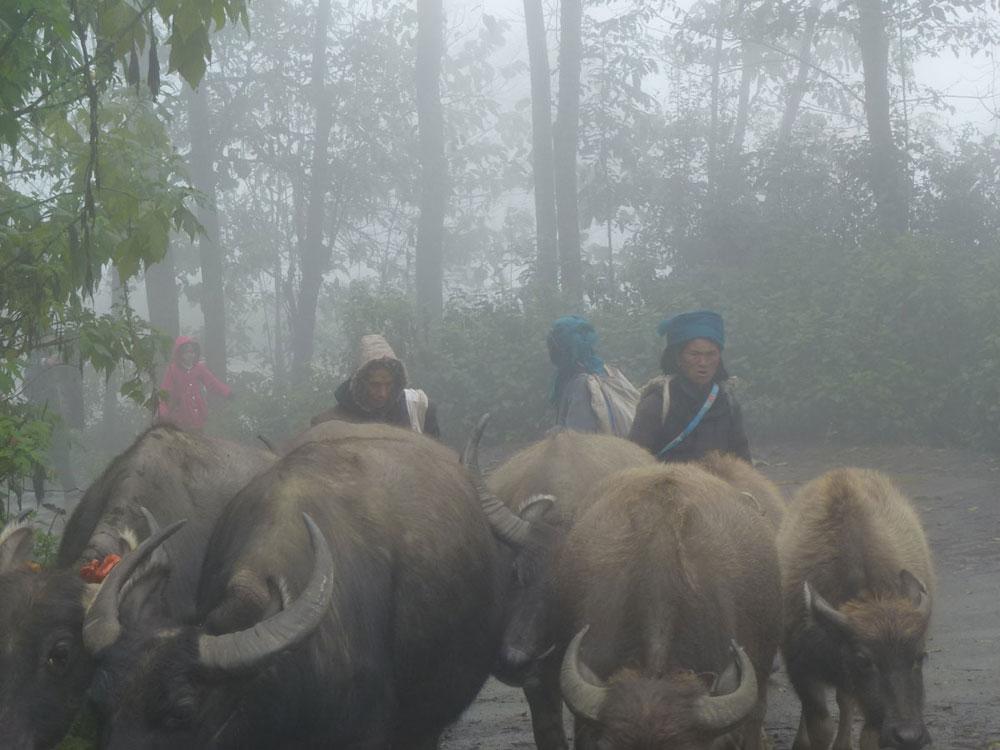 Yunnan, buoi