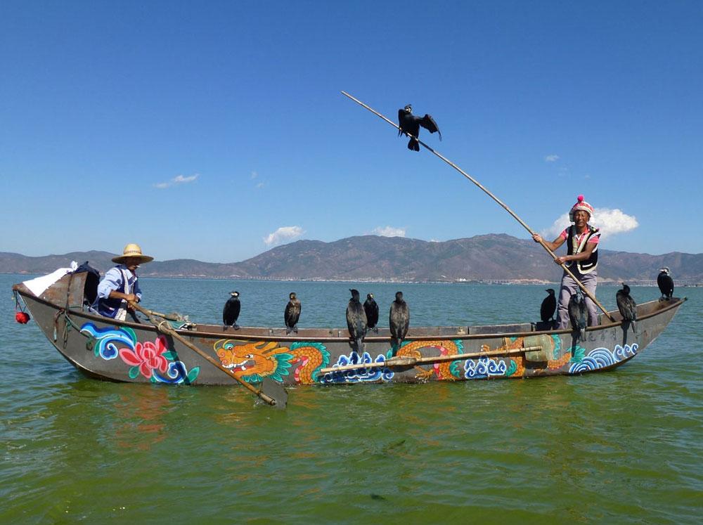 Yunnan, pesca con i cormorani