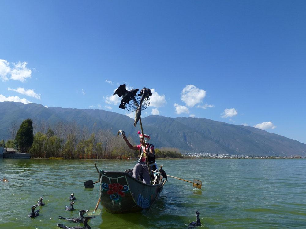 Yunnan, cormorani pescatori