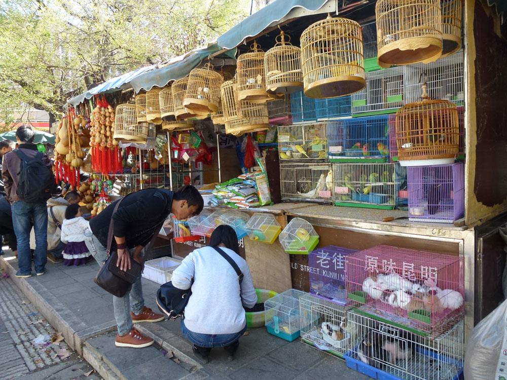 Yunnan, Kunming mercato, uccellini in mostra